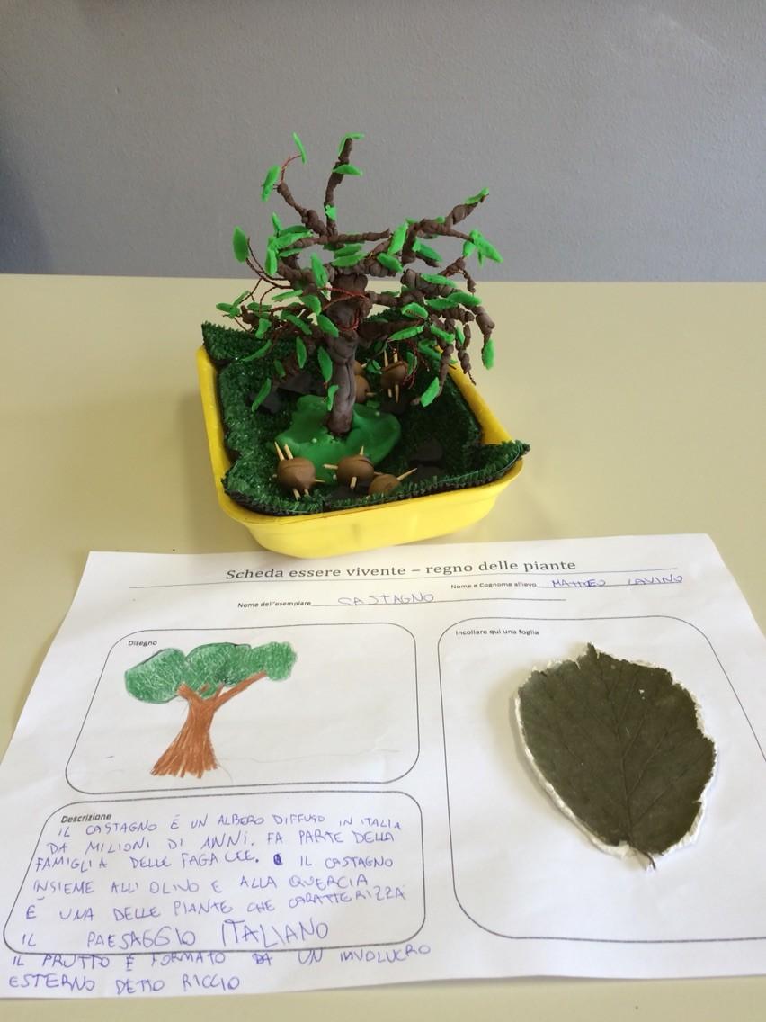 Progetto estivo regno delle piante 2015: Matteo