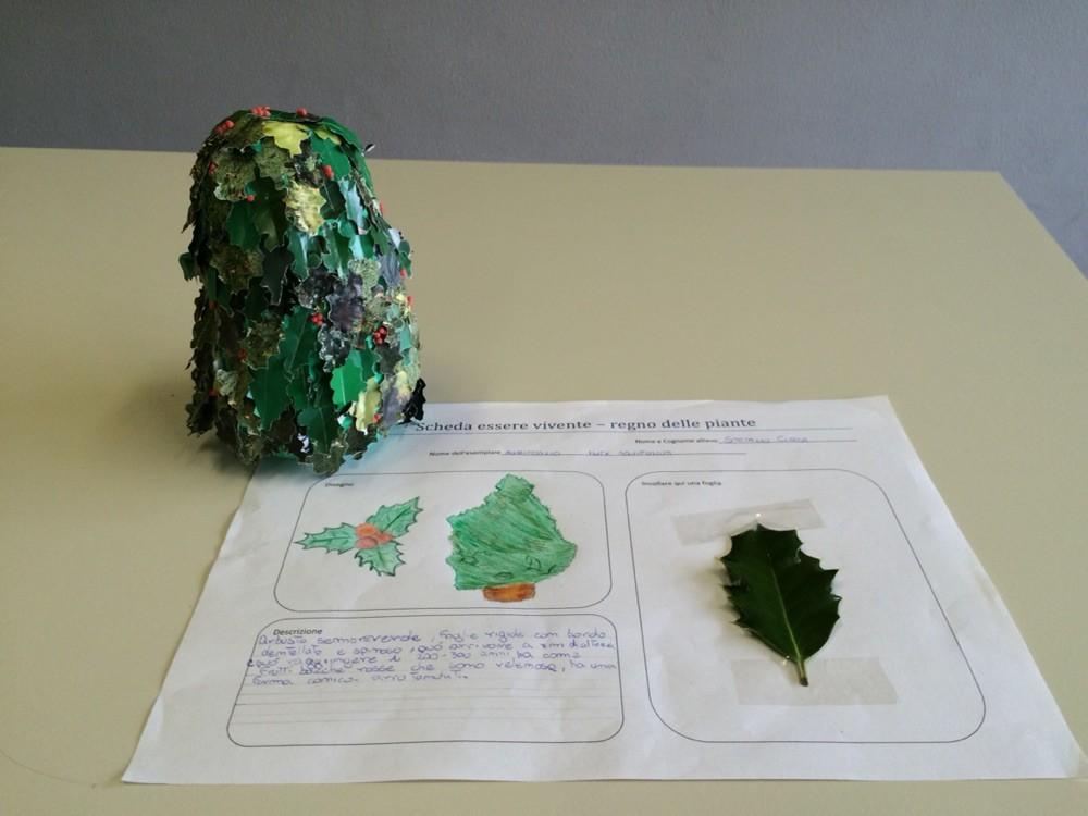 Progetto estivo regno delle piante 2015: Stefano