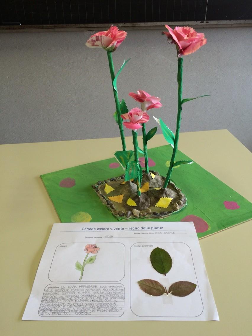 Progetto estivo regno delle piante 2015: Camilla