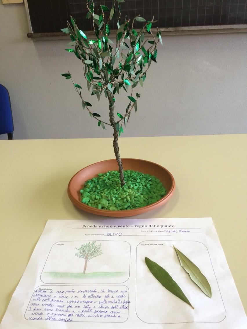 Progetto estivo regno delle piante 2015: Davide