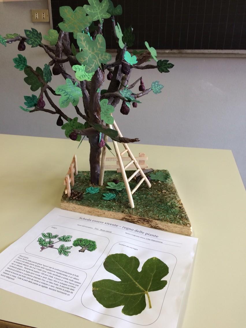 Progetto estivo regno delle piante 2015: Lisa