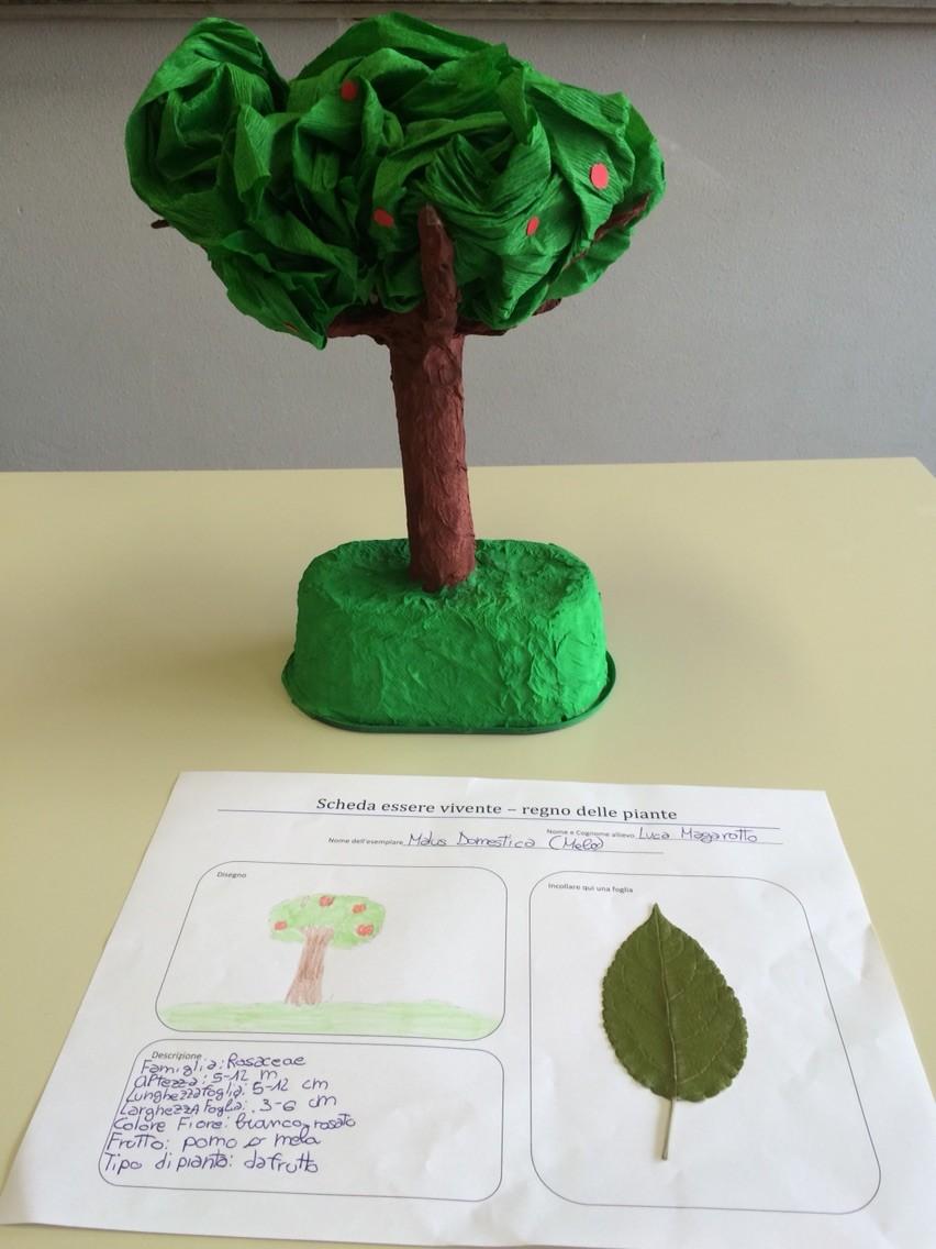 Progetto estivo regno delle piante 2015: Luca