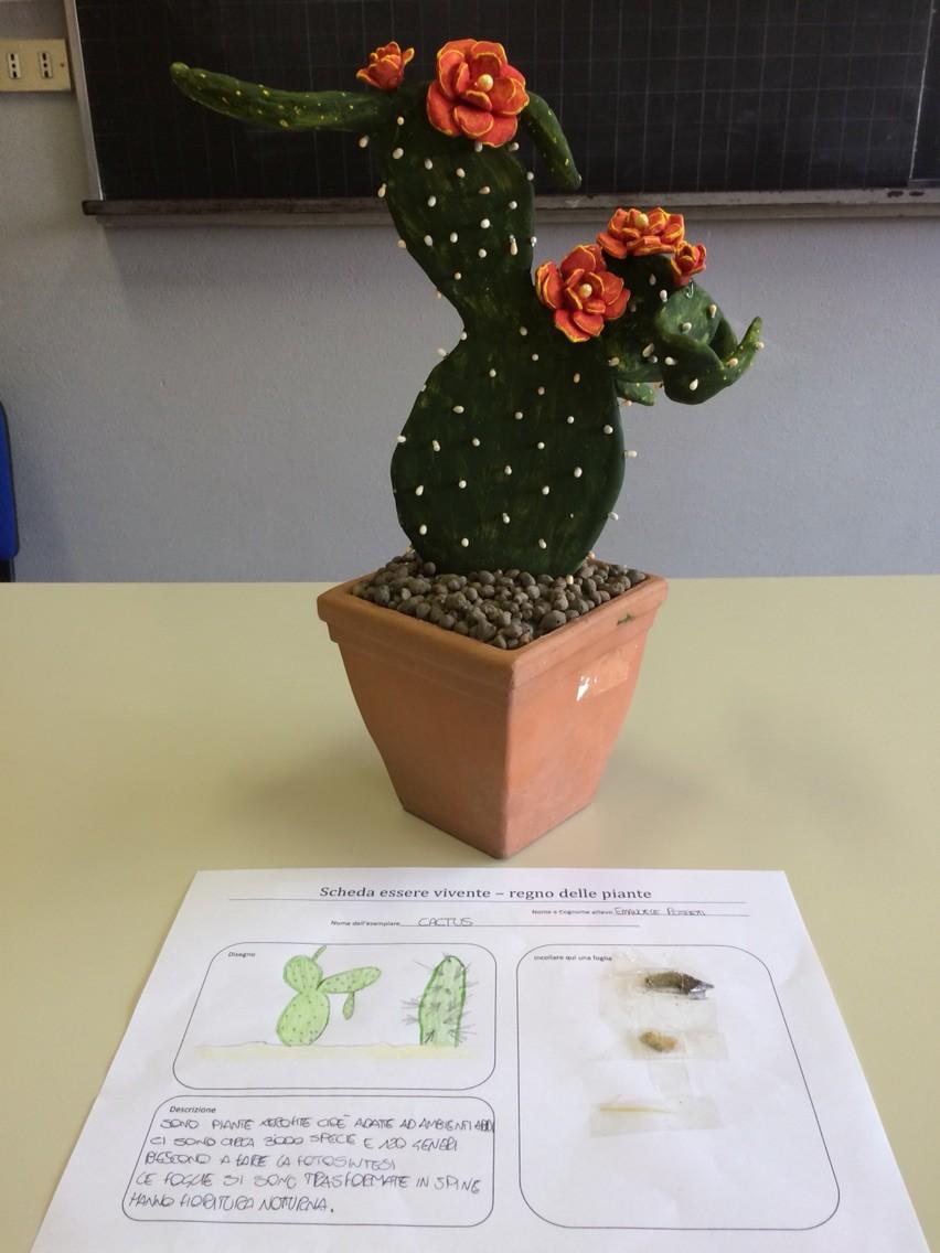Progetto estivo regno delle piante 2015: Emauele
