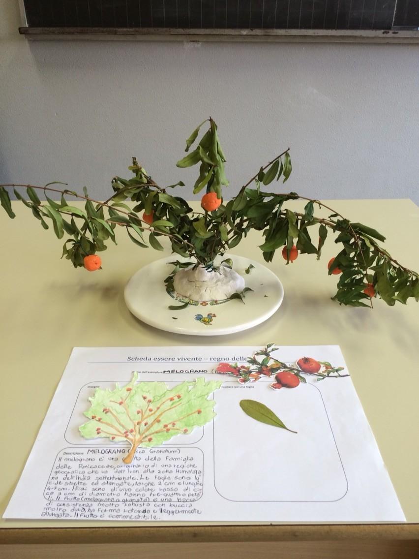 Progetto estivo regno delle piante 2015: Alessandro