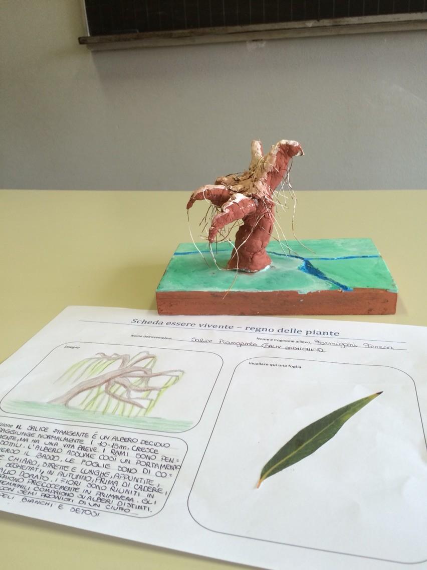 Progetto estivo regno delle piante 2015: Teresa