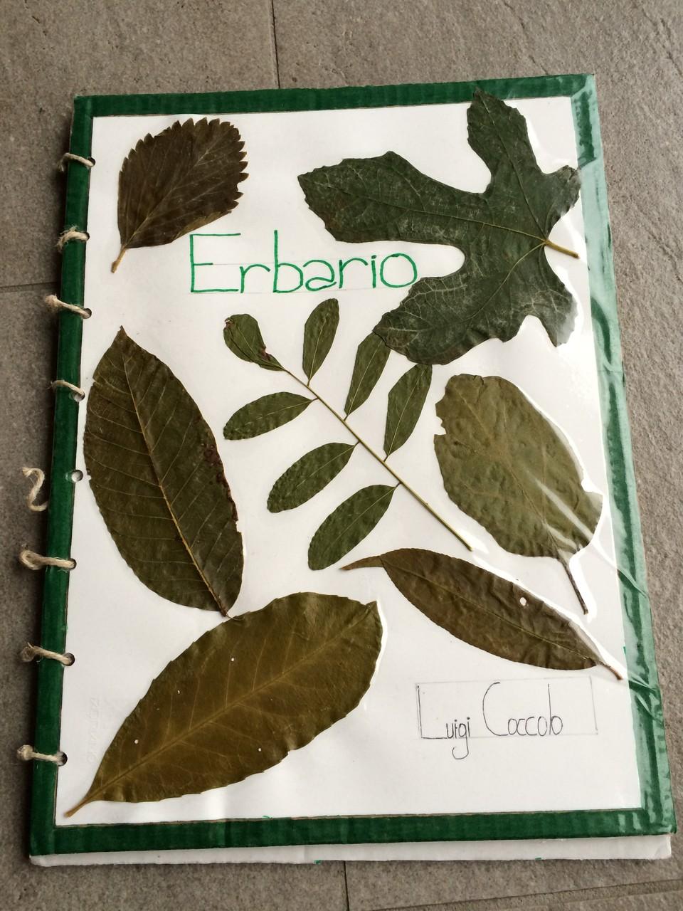Progetto Erbario, le copertine più originali: classe IID 2014/15