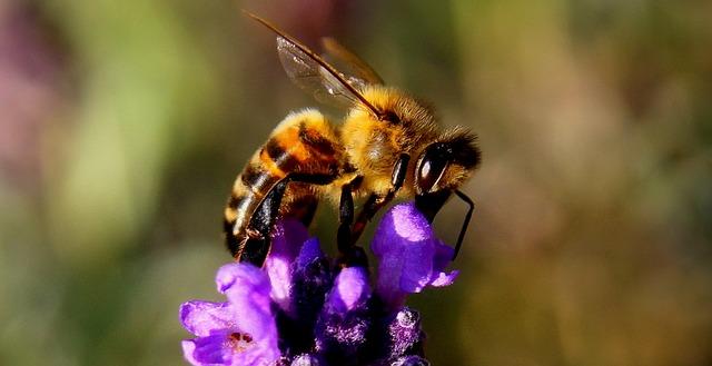 """Broschüre """"Bienenfreundliche Pflanzen"""""""