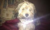 Monty (ehemals Nico)  † Dezember 2010