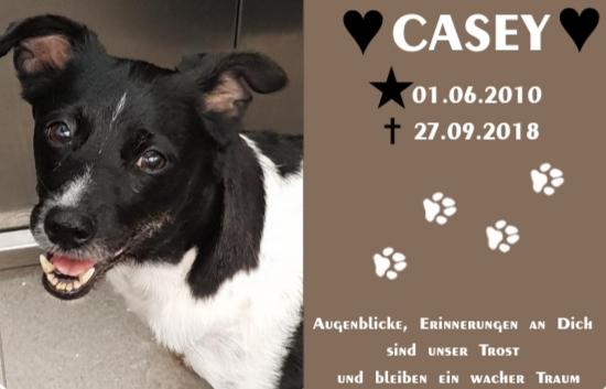 Casey † September 2018