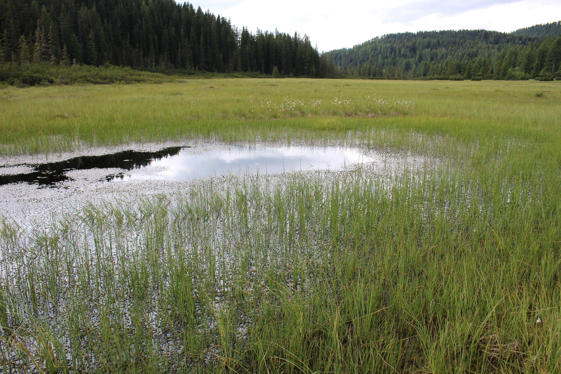 Moorsee Gstreikelmoos