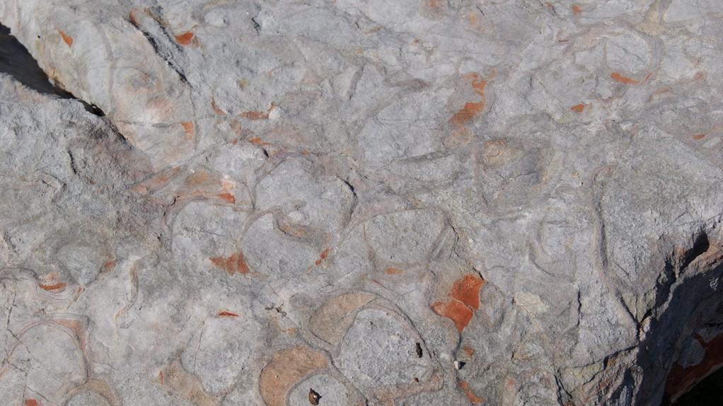 Kalkstein mit Muscheleinschlüssen