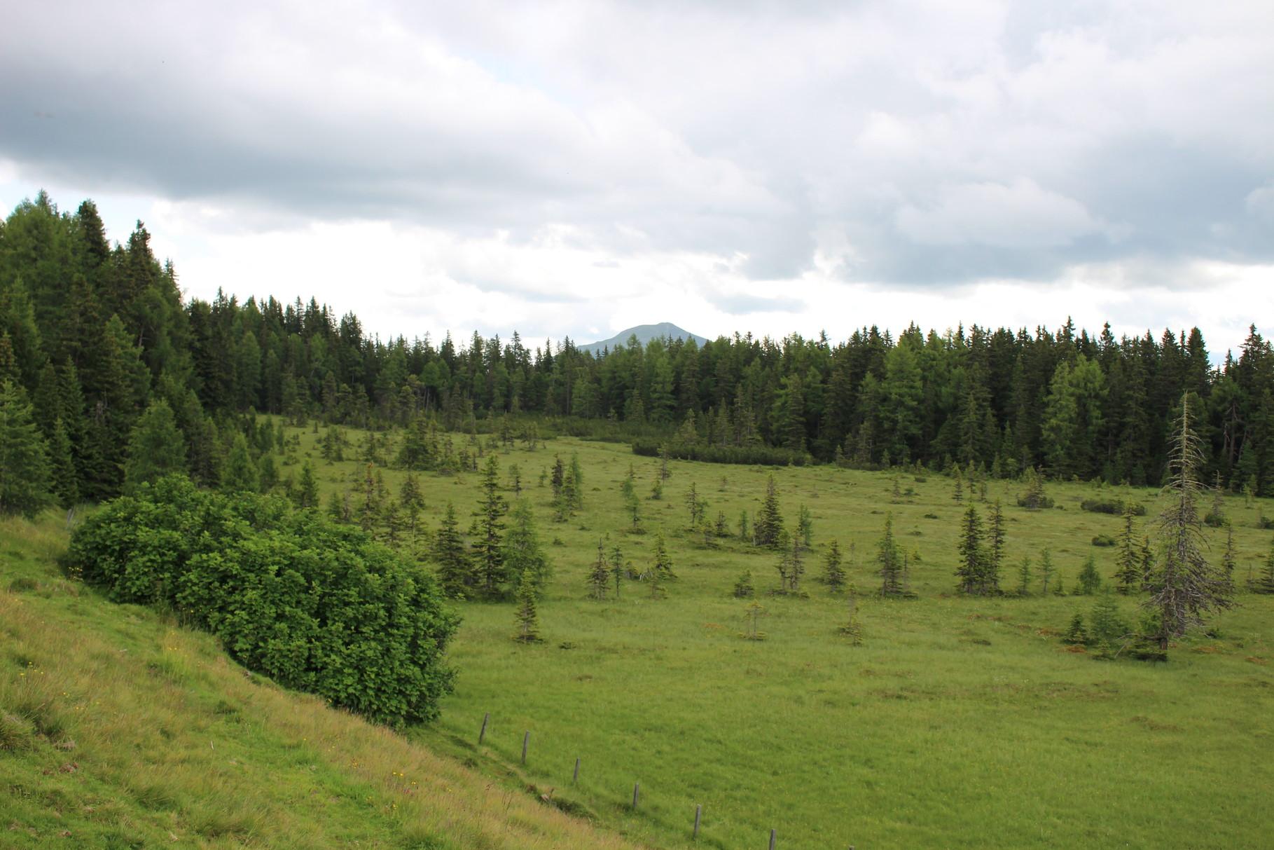 Niedermoor bei der Überlinghütte