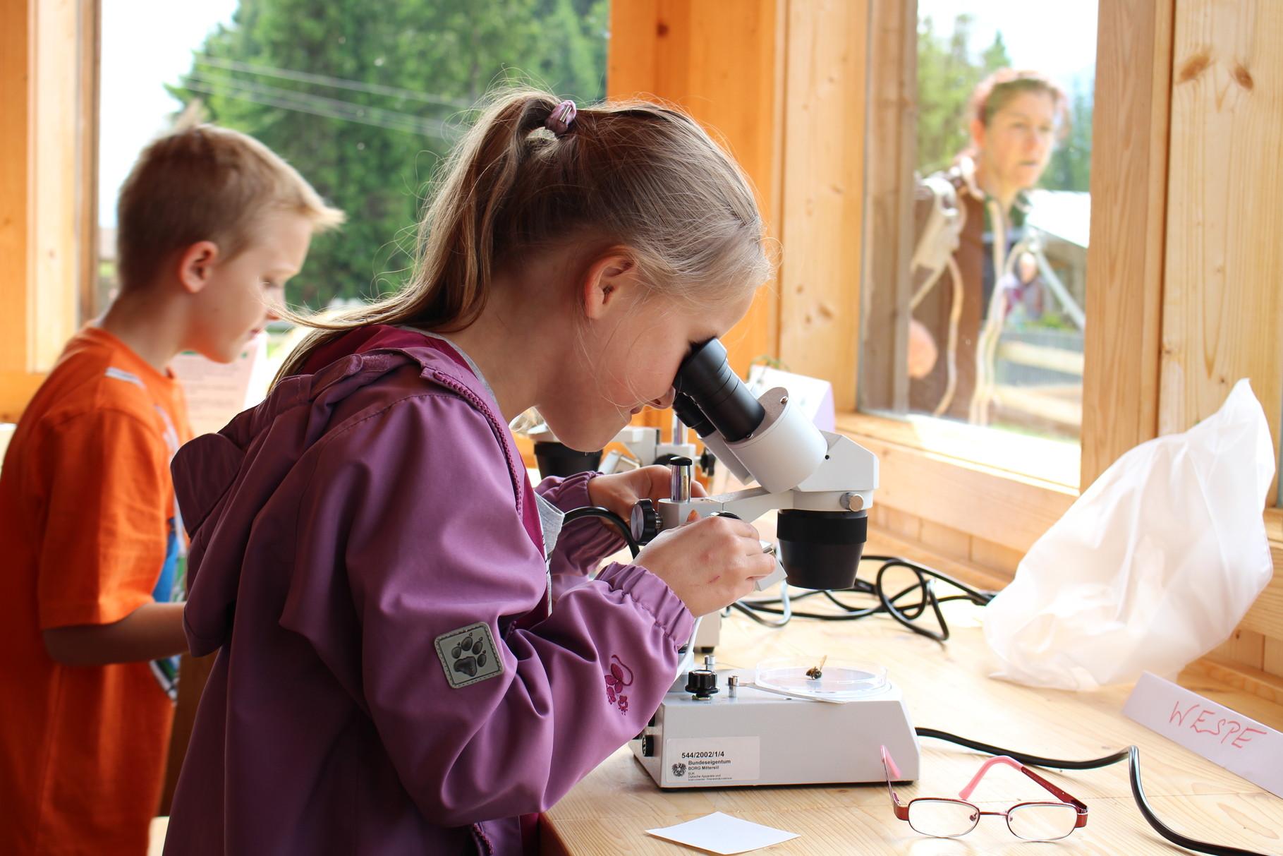 Die Kinder der Volkschule Mittersill betrachten die Moorlebewesen unter dem Mikroskop