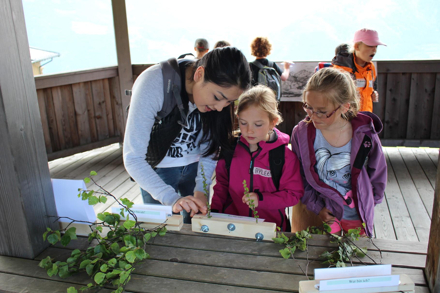 Diljara Mitaliova vom BORG Mittersill (Klasse 6c) zeigt den Kindern der Volkschue Mittersill verschiedene Moorpflanzen