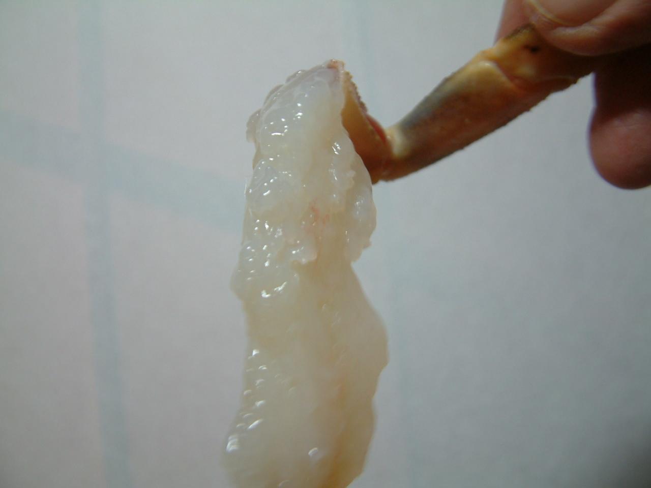 松葉蟹 刺身 一例
