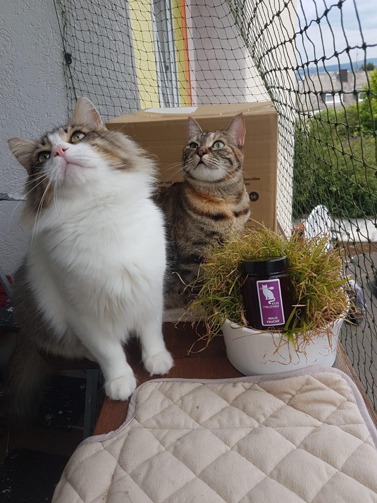 Noah & Mischka mit Kein Firlefanz Waldfrucht