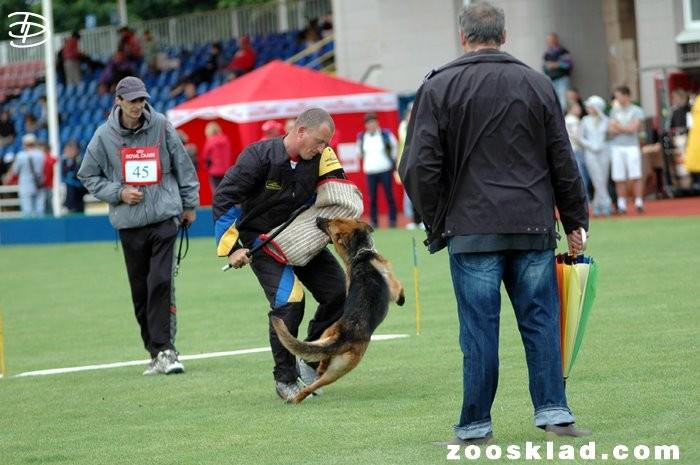 Universal Championship of Ukraine - 2012 Richter: Heinz Scheerer, SV in Borispol GHKL-H Rakira Haus Wityk -V3, TSB. ausgeprägt; läßt ab.