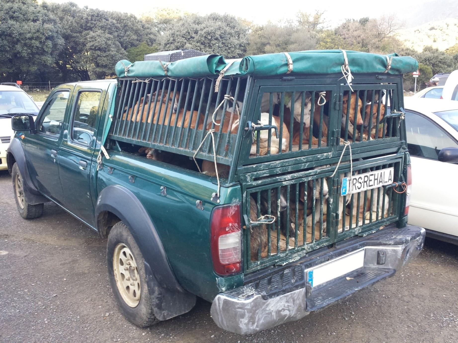 In diesem Pickup sind pro Etage etwa 12 Hunde eingesperrt. Auf Holzböden. So niedrig, dass sie nicht einmal stehen können. Eine Schande!