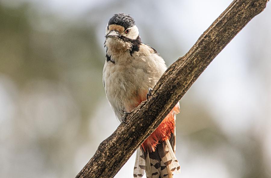 Vögel im Frühling