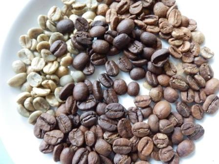 Kaffeebohnen in verschiedenen Röststufen, links die nicht geröstete Bohne (Foto:D.Mathes)