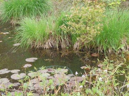 …Teichlandschaft…(Foto: D.Mathes)