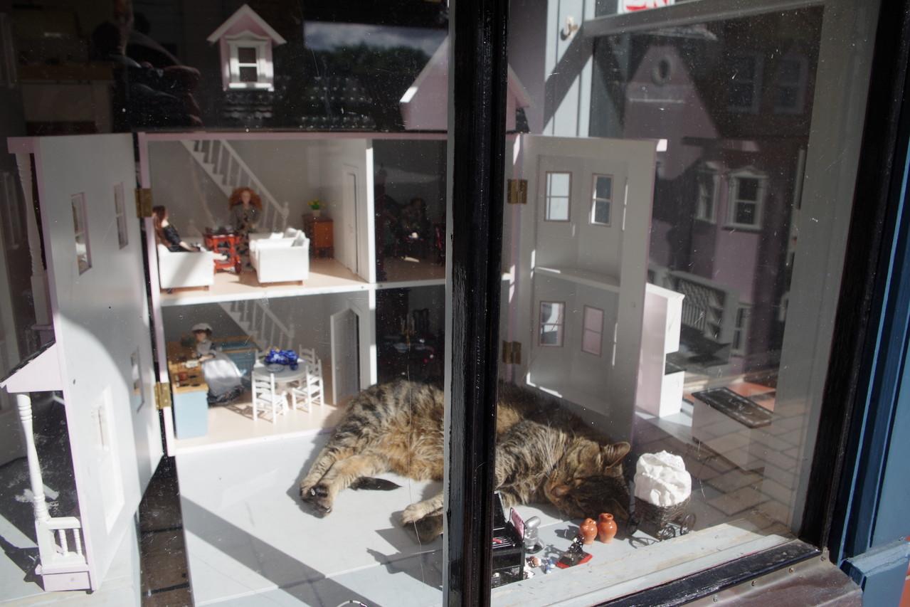Da liegt ja eine Katze im Schaufenster ;-)