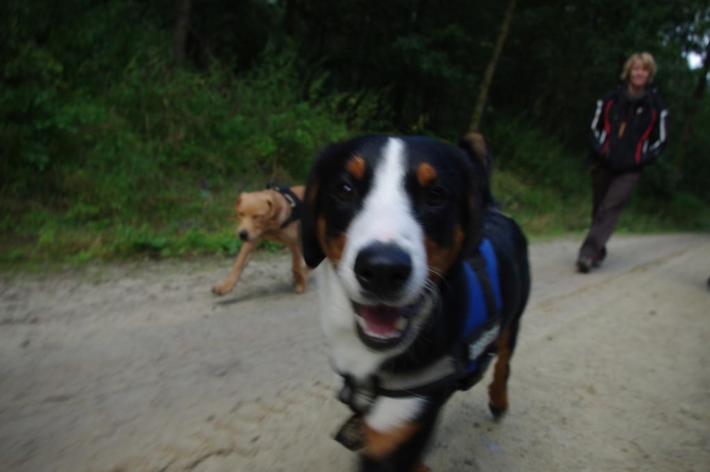 Im Garlstedter Forst spazieren