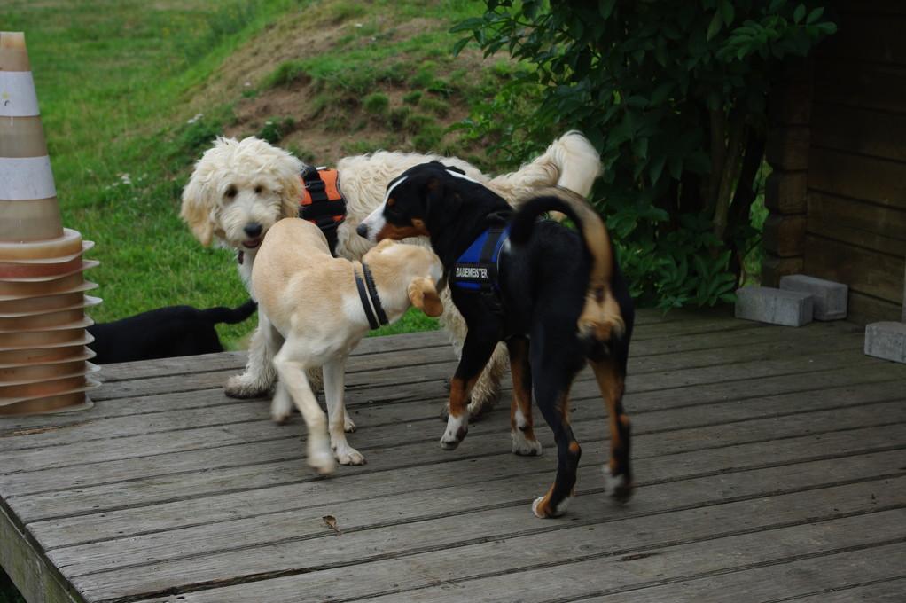Junghundekurs...spielen mit Kimba und Elvi