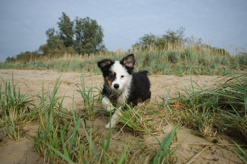 Das ist Smilla! 12 Wochen alt