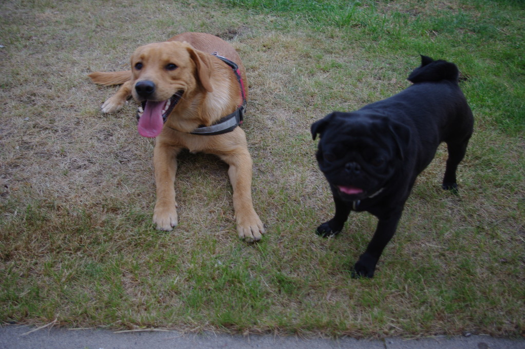 Ghino und Jasper