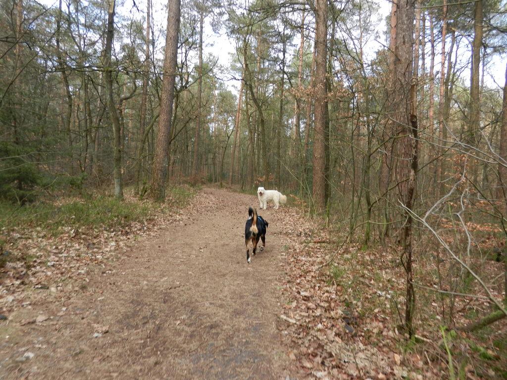 Mit Kimba im Garlstedter Forst