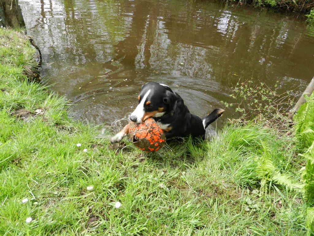 Mein Ball (naja, was von ihm über ist) muss auch mal gewaschen werden.