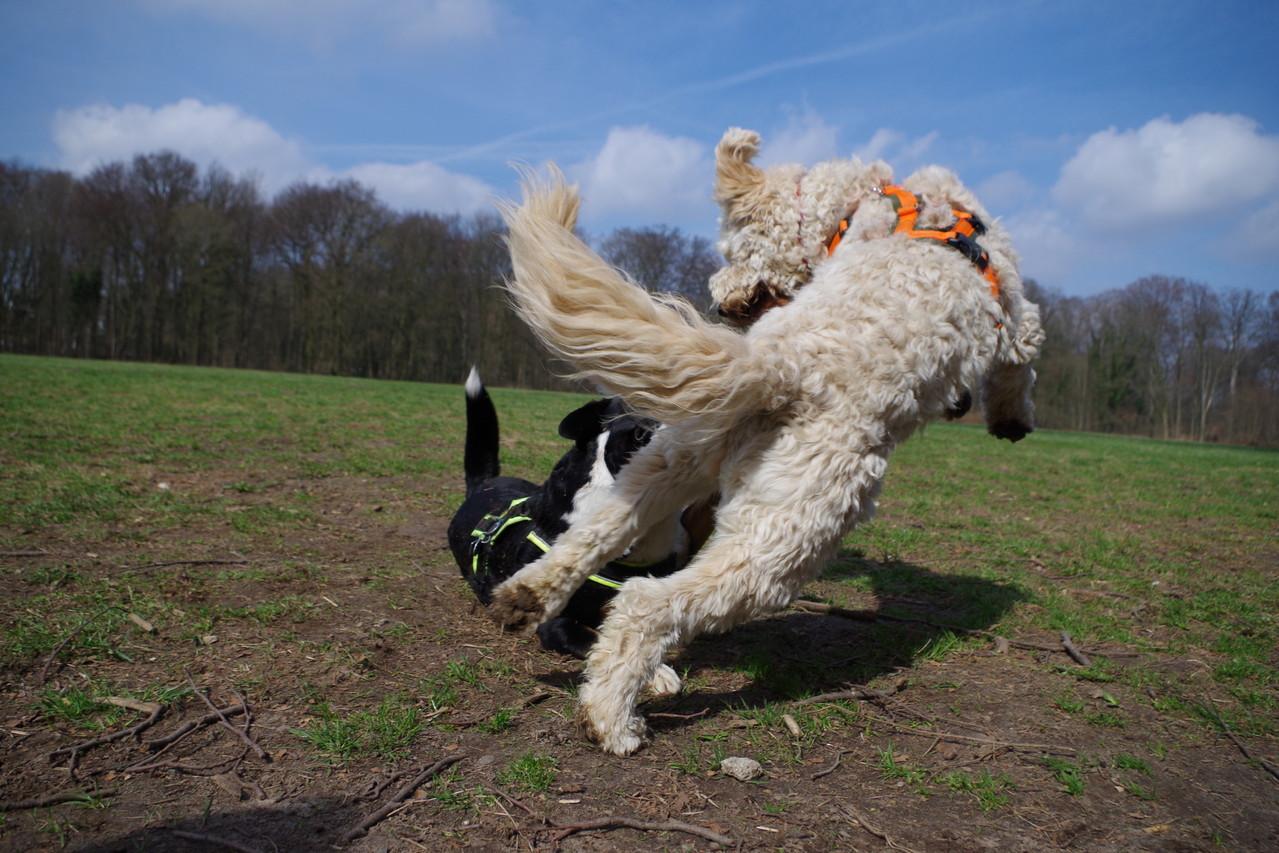 Mit Kimba auf der Hundewiese am toben