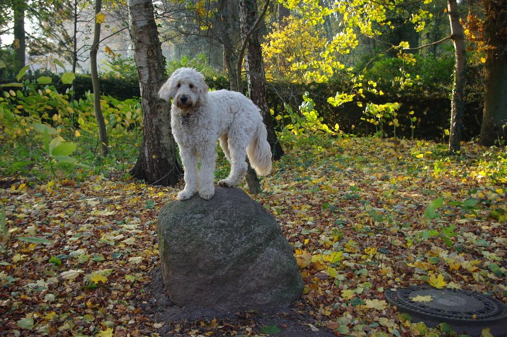 Kimba ist einfach mal auf den Stein gesprungen
