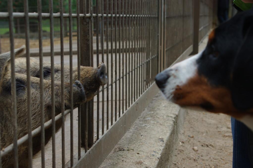 Schweine...toll