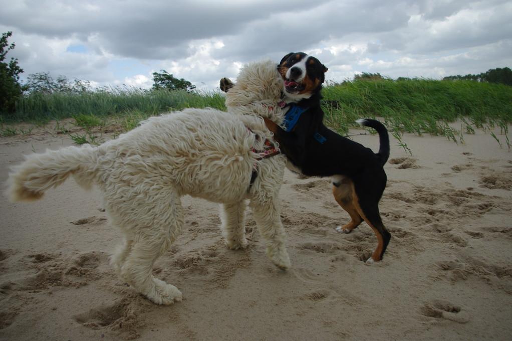 Kimba und ich am Strand!