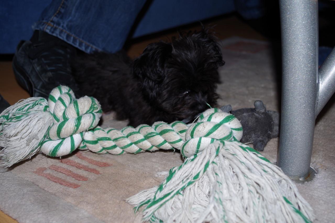 Sie ist kleiner wie mein Spielzeug