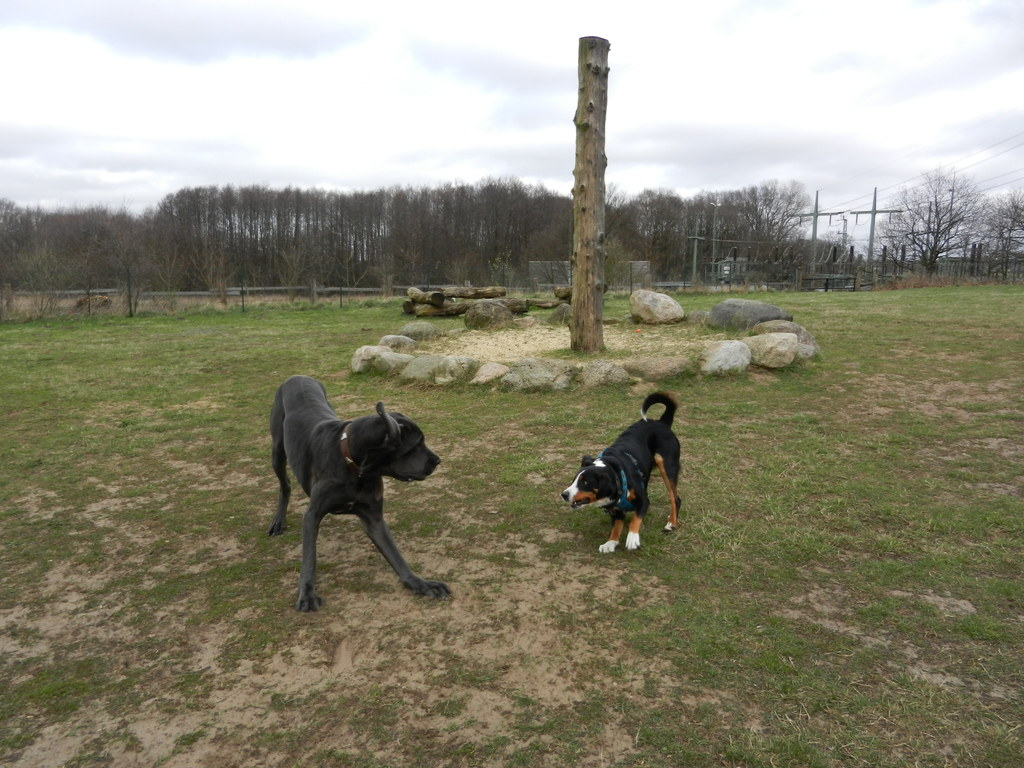 Das ist Christo, mit dem spiel ich gerne in der Hundeschule