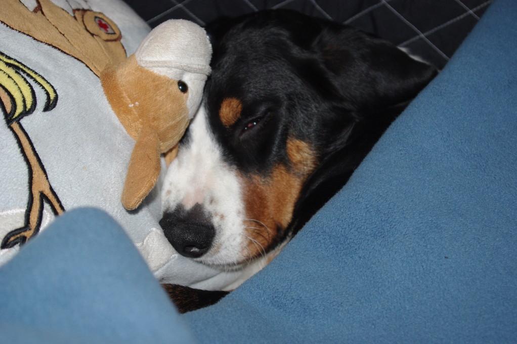 Nach der Narkose beim Tierarzt, muss ich zu Hause noch schlafen