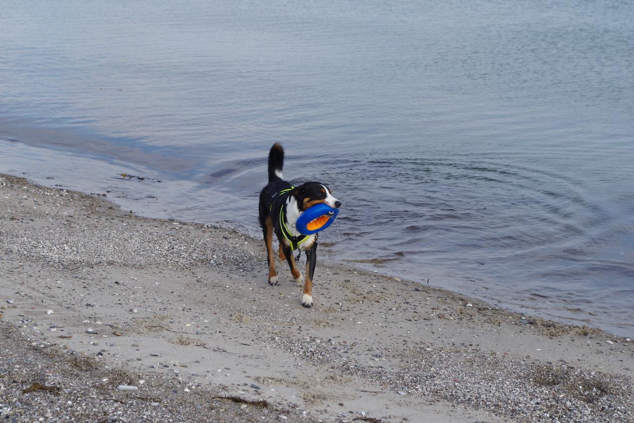 Erster Strandbesuch