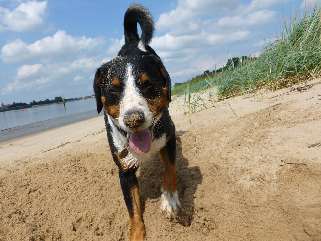 Strand ist einfach super :-)