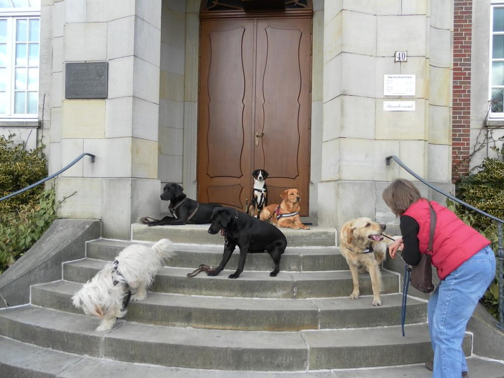 """""""Bleib"""" Übung mit der Hundeschule...."""