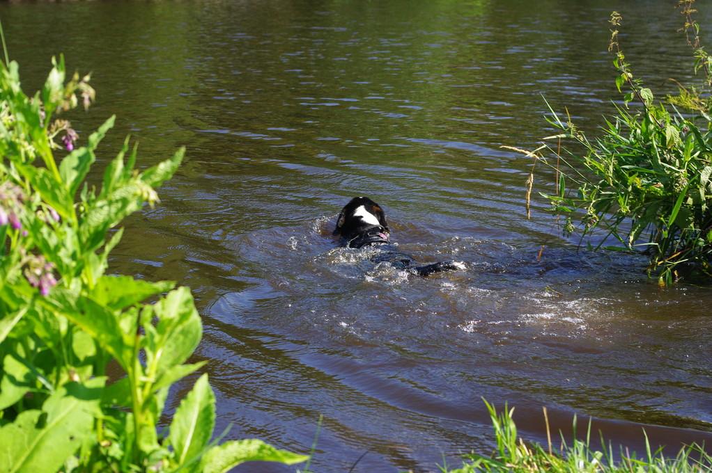 schwimmen, bei 30 Grad, das macht spaß und erfrischt