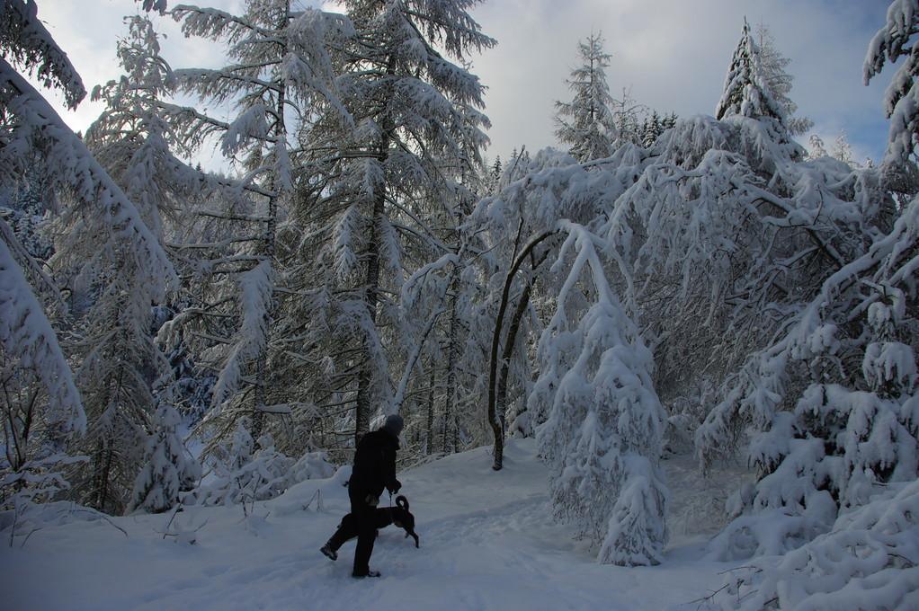 Ist da viel Schnee auf den Bäumen
