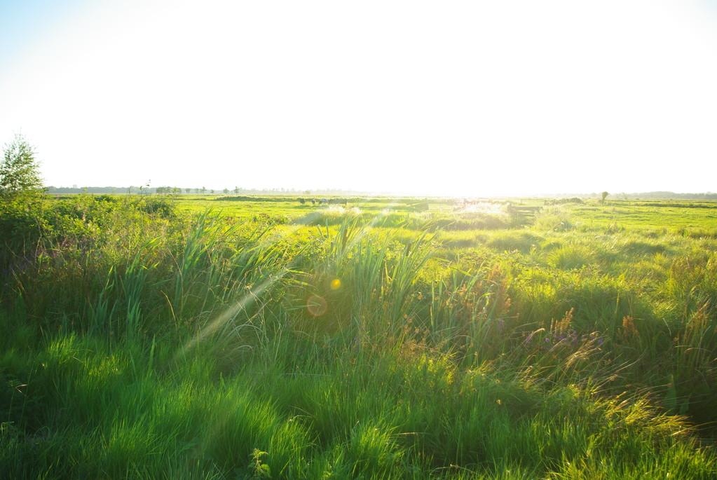 Spaziergang in den Feldern