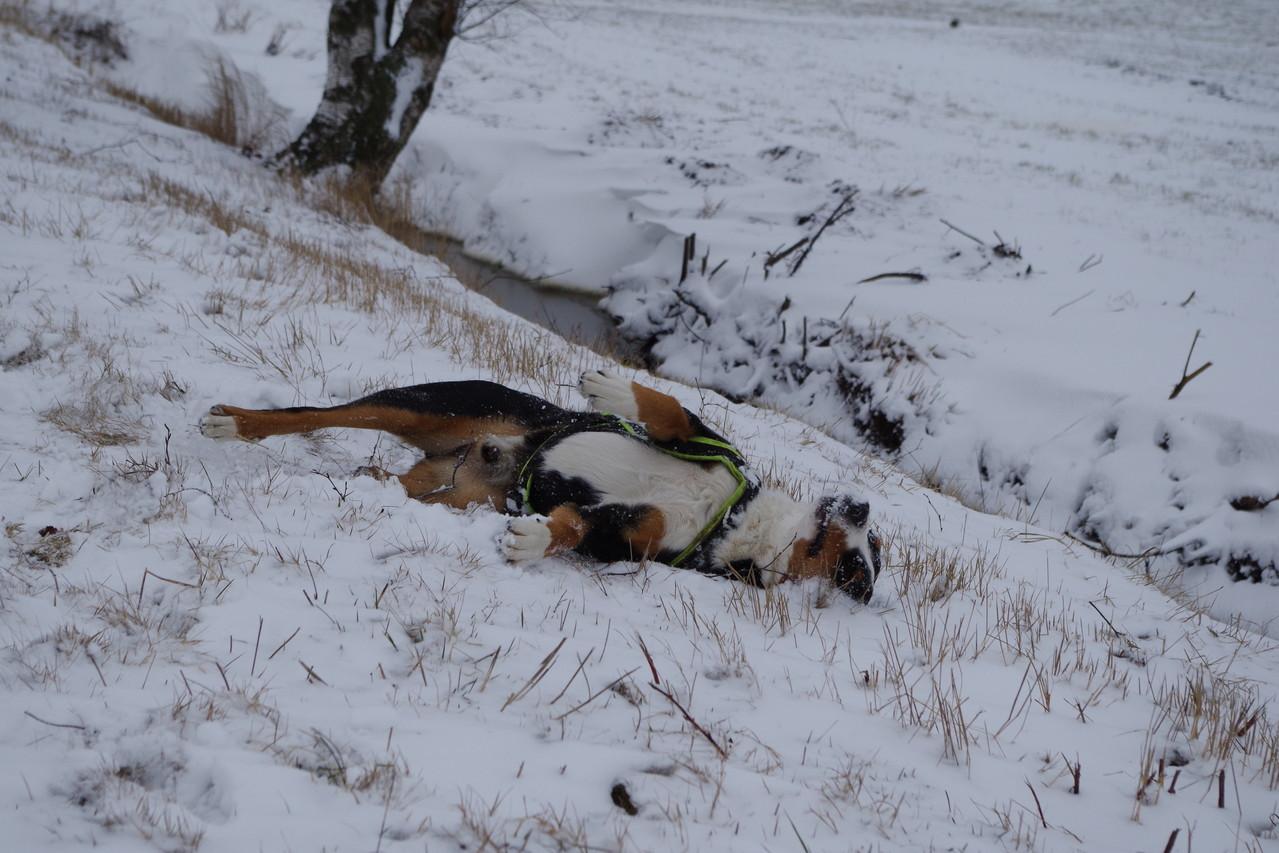 erst einmal eine Fell pflege im Schnee  ;-)
