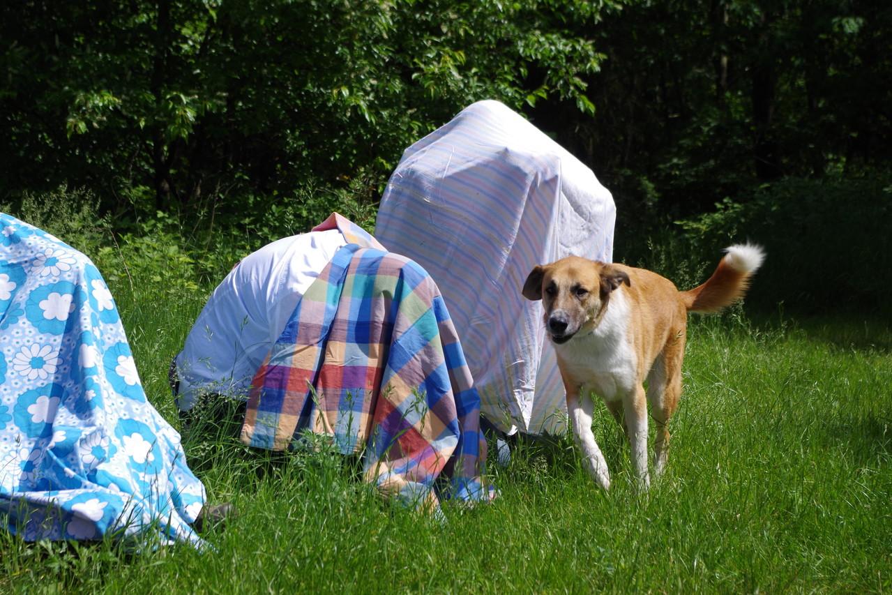 Jeder Hund durfte mal suchen :-)