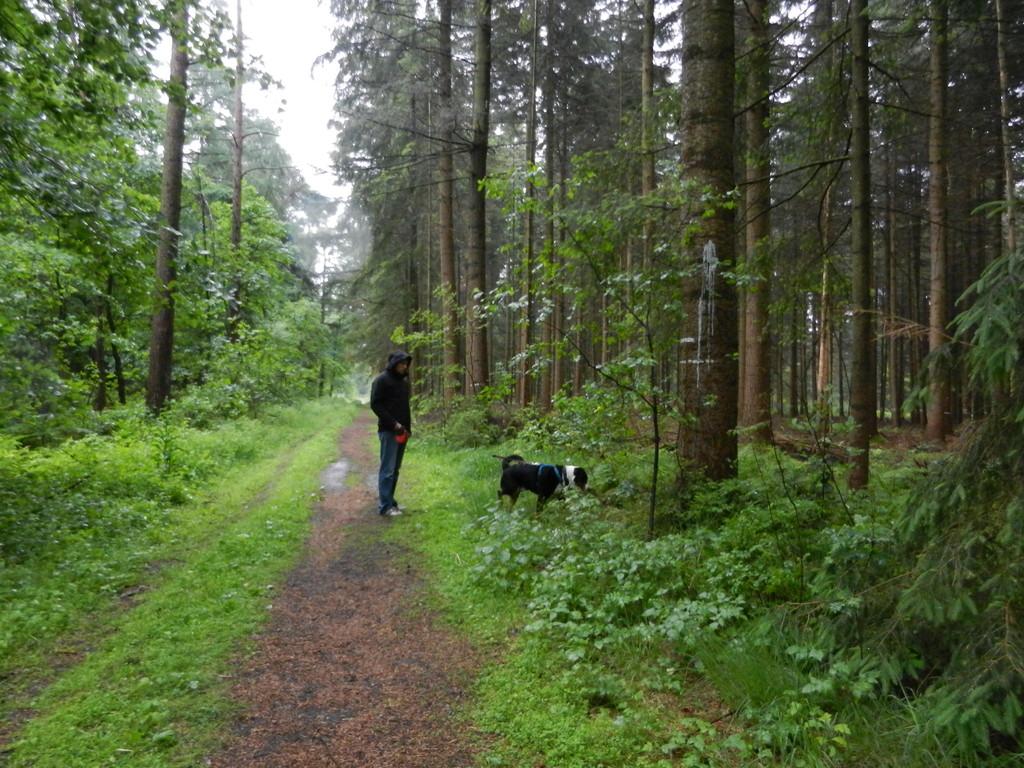 Such spiele im Wald
