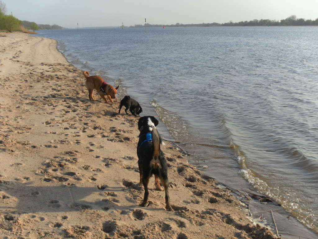 Ghino, Jaspe und ich am Wasser