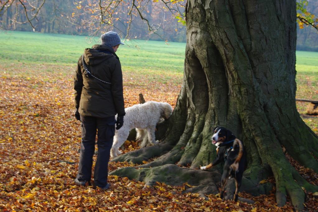 Bei diesem Baum gibt es immer was zu trinken....und das weiß jeder Hund hier